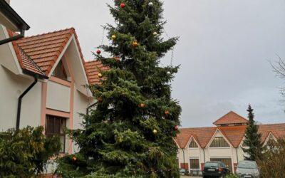 29. listopadu 2020 Ládevský Vánoční strom